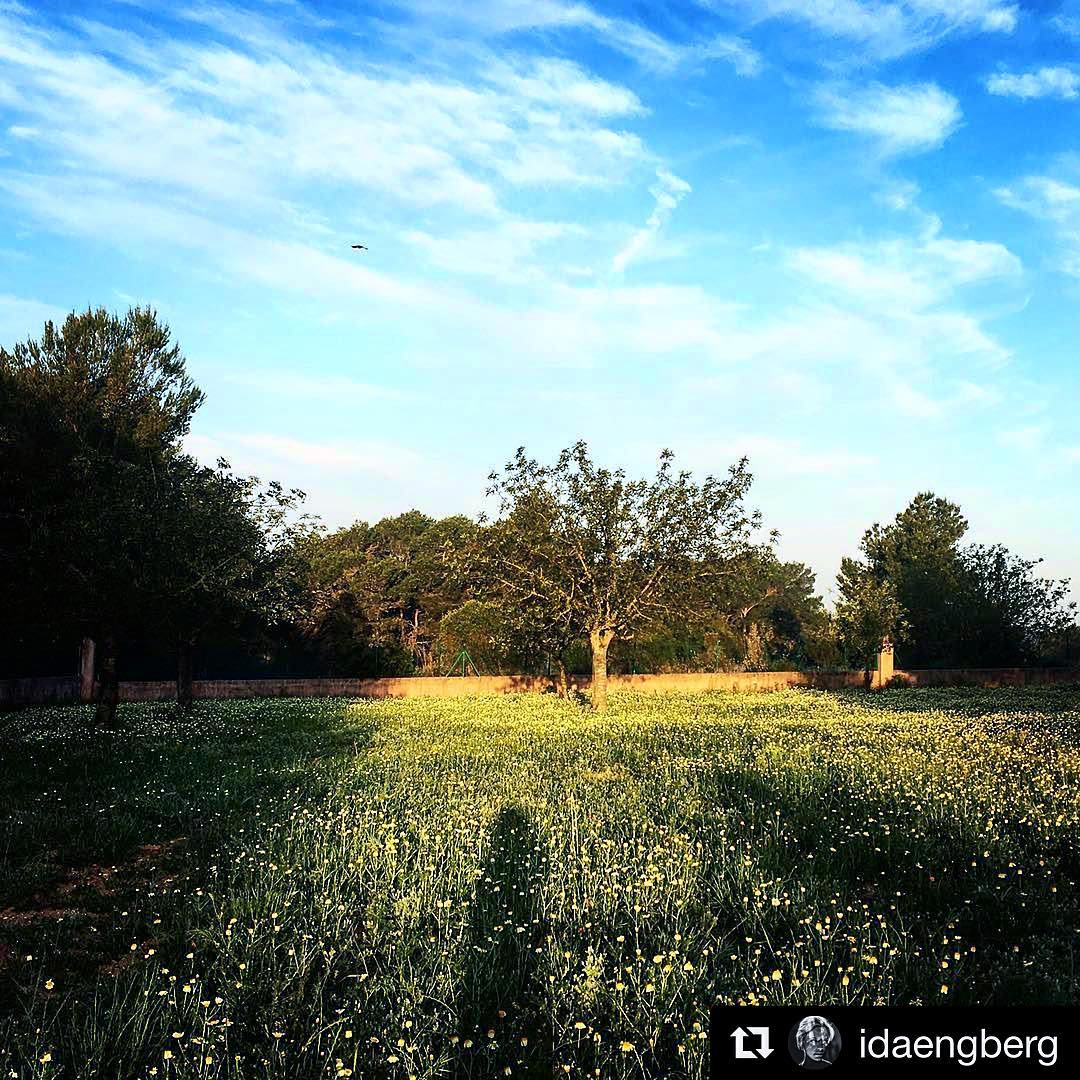 Good morning from the backcountry 🌳 Thanks to @idaengberg for the nice shot! #ibiza #morningsun #goodmorning #backcountry #ibizanature #ibiza2017 #nature #green #blue #idaengberg #drumcode #clouds #ibz #igersibz #ibizaexperience #spain #ibizadiary, SANT LLORENÇ DE BALAFIA