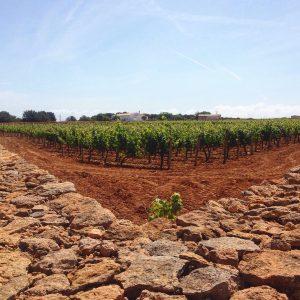 Formentera Weingut Terramoll