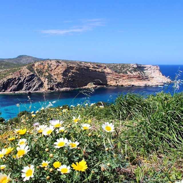 Lovely #springflowers 🌸🌼🌿 framing the view down to #escanaret #ibizaspring #flowerpower #flowerpoweribiza #ibiza2018 #ibizadiary #lovelyibiza #flowersofibiza #islasbaleares #beautifulibiza #natureibiza #northofibiza #bluesky #turquoiseocean #yellowflowers #sunnyday #spring #balearicislands #hikingibiza #hikeibiza #instahike #instatravel #instanature, Cala Es Canaret (Sant Joan de Labritja, Ibiza)