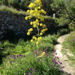 Ibizas Blütenpracht im Frühling