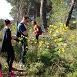 Ibizas essbare Wildpflanzen probieren