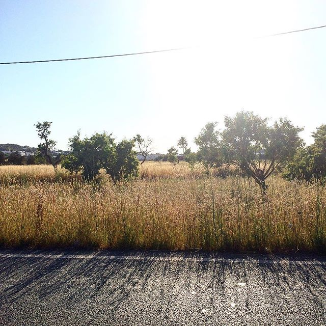 Good morning from the beautiful countryside 珞 #goodmorning #wokeuplikethis #ibizanature #ibiza #morningview #nature #sky #goodvibes #road #corn #instaibiza @ibiza.official #ibizaholiday @ibizamylove #ibiza2018 #ibizadiary, Sant Agustí des Vedrà