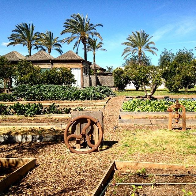 Looks like in paradise 🌻 This is the backyard of Agroturismo Atzaró 🌴 #nature #green #atzaro #garden @nature_org #ibiza #agroturismo @ibiza.official #ibiza2018 #palmtrees #gardening #ibizanature #summertime #food #plants #ibizadiary, Atzaro