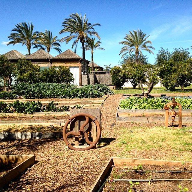Looks like in paradise  This is the backyard of Agroturismo Atzaró  #nature #green #atzaro #garden @nature_org #ibiza #agroturismo @ibiza.official #ibiza2018 #palmtrees #gardening #ibizanature #summertime #food #plants #ibizadiary, Atzaro