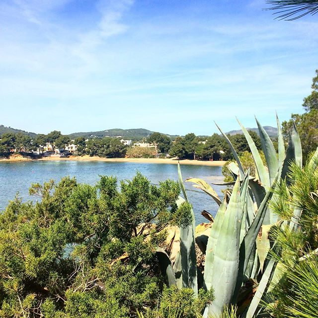 Beachview from the cliffs 🌞 It's always worth to walk upside the main walkways 🙏🏻 #niceview #goodvibes @nature_org #nature #green @plantsnap #plants #instanature #blogger #travel 🌵#Ibiza #ibizanature #ibizatravel #ibizadiary, Restaurant Niu Blau