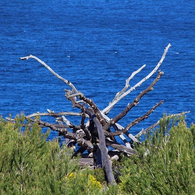 Beautiful art, created by nature! @nature #nature #ibiza #seaview 🙏🏻 #beautiful #ocean #creativity #perfection 🌍 @ocean @ibiza.official  @nature_fotografias #blue #green #blogger #naturelovers #ibizadiary, Cala Xarraca-Ibiza