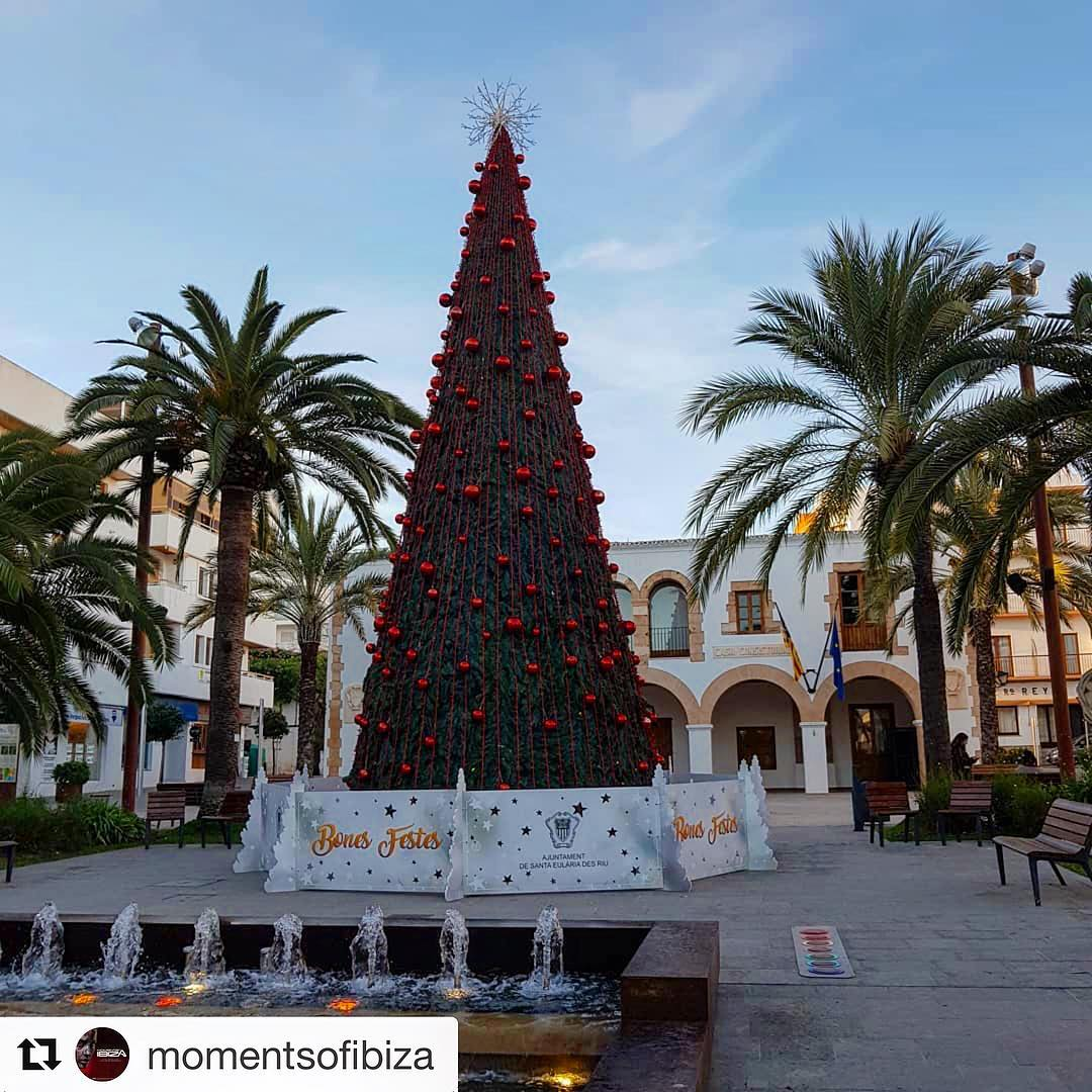 Probably the most comely christmas tree on the island 🎄#ibiza #christmas #ibizaxmas #christmastree #tree #green #navidad #december #instachristmas #beautiful @nature_worldwide_trees #ibizadiary, Santa Eularia, Ibiza