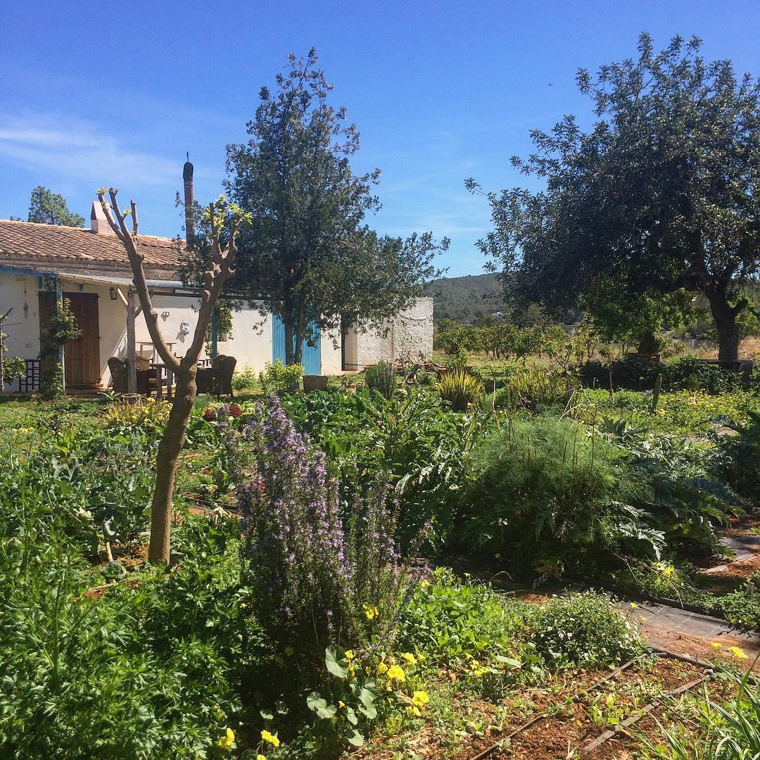 Enjoying the beautiful nature in the heart of the island! #nature 🌾 #natura #ibiza #españa #igersspain #planta 🍆🥬 #cultivar #food #instanature #ibizalove #ibizadiary, AGROTURISMO XARC