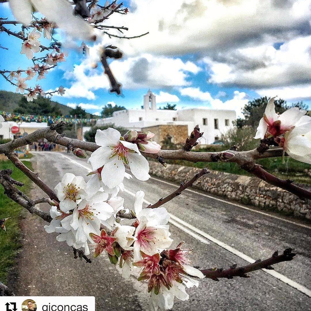 New fruit coming up 🍎 #ibiza #nature #blooming Thanks to @giconcas for the beautiful shot! #repost #natura #españa #naturephotography #islasbaleares @baleares_islas #fruit #fruitporn #ibizawinter @nature_brilliance #ibizadiary, Santa Agnès de Corona