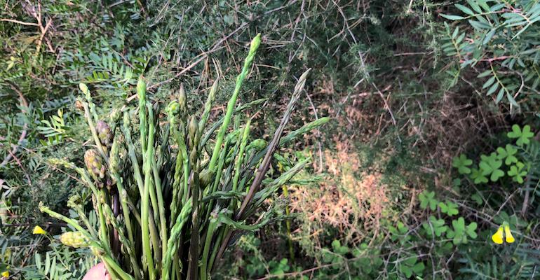 Wilder grüner Spargel auf Ibiza - von Januar bis März ist er überall zu finden.