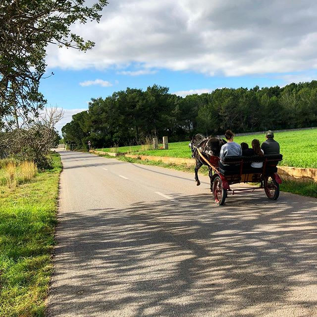 We love the traditionell campo life ❤️ Kids on tour with the horse drawn carriage 🐎 #ibiza #campolife #horswagon #horsedrawing #instahorse #ibizapics #countryside #nature #goodlife #instagood #instaibiza #baleares #ibizadiary, San Carlos, Islas Baleares, Spain